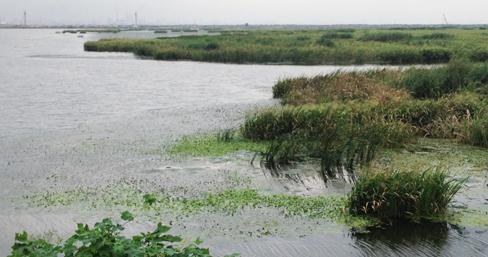 江苏南通开沙岛旅游度假区规划项目开始启动